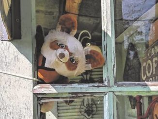 Hunt for teddy bears offers outdoor fun in days of virus-imposed isolation