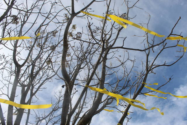<p>Tomeka Sinclair | The Robesonian</p>                                 <p>Yellow ribbons are tied to trees along McDuffie Crossing in the Saddletree community. The ribbons were a symbol welcoming home Brooke Humphrey.</p>