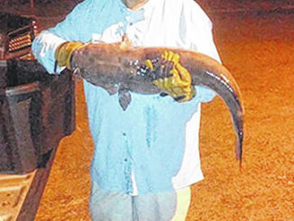 John Stone, of Pinehurst, broke the state's channel catfish record on Sept. 22, 2020, with a fish weighing in at 23 pounds, 5 ounces. Stone caught his fish using cut bait.