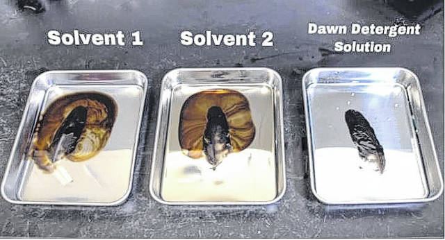 <p>Shown are feathers contaminated with oil being submerged during a cleaning process. As displayed on the first two trays, the feather on the left was cleaned using solvents developed by Crude Spill Cleaning Co., whereas the feather on the right, which was cleaned using a dish detergent solution, simply sits on top of the detergent solution.</p>