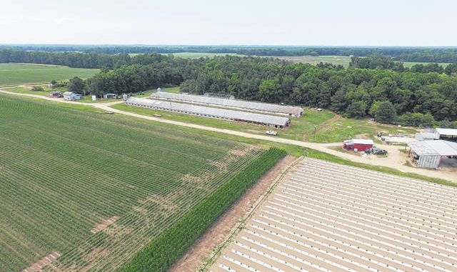 Shown is David Mayer Farms in Hobgood, where industrial hemp is grown for the recently formed Hobgood Hemp company. This year about five acres of hemp will be grown on the farm, which includes about 1,000 acres of land that Mayer tends. The industrial hemp company was formed in December and will be managed by Ron Elkins, a partner in the company, who hails from Lumberton.