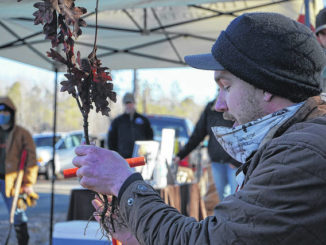 Three Rivers Land Trust, Troy Rotary Club join forces to plant 2,000 hardwood trees