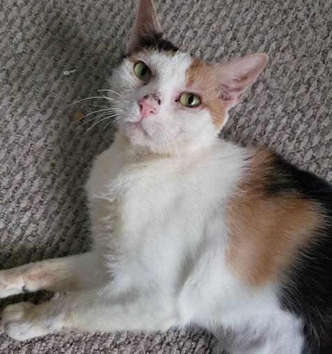 Fur-Ever adoptable pet
