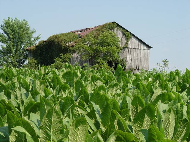 Robeson County Tobacco Research Referendum set for Nov. 18